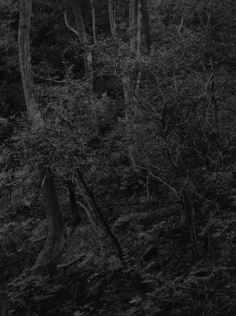 Photography by DAICHI KODA -Untitled(tree)